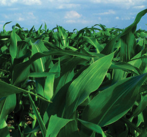 Biopesticides Primed for Growth