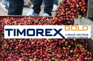 Peruvian Registration Authorities Approve Timorex Gold Biofungicide for the Control of Coffee Rust