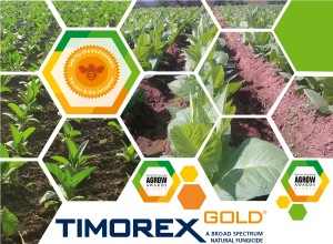 Timorex Gold Biofungicide has been approved for use in Tobacco Crops by the ICA