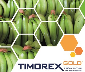 Timorex Gold is the 1st Organic Fungicide for the Control of Black Sigatoka in Banana