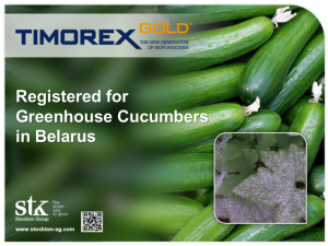 Timorex Gold Biofungicide Registered for Greenhouse Cucumbers in Belarus