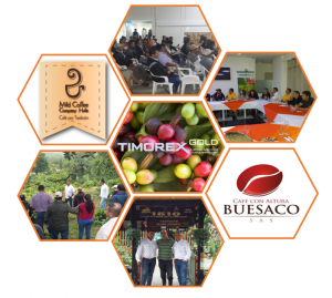 Timorex Gold Biofungicide has been approved by the ICA for Coffee and Maize