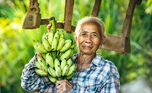 A brighter future of banana growers has arrived, and the best ally is Timorex Gold