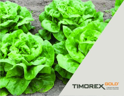 Chile Reauthorizes TIMOREX GOLD® and Expands Use to Additional Fruits and Vegetables Through 2022