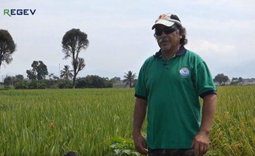 REGEV: O primeiro fungicida foliar híbrido no mercado