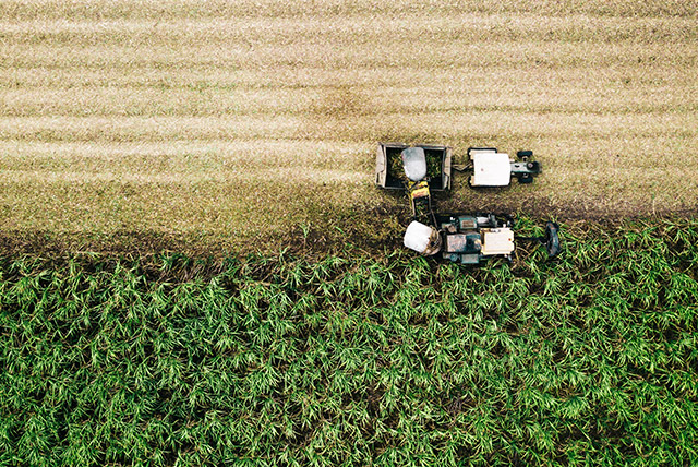 The ultimate way of crop protection is hybrid | STK