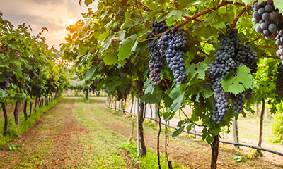 STK Welcomes French Wine Growers to Israel for Sustainable Solutions