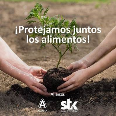 "STK and ADAMA announce an exclusive distribution agreement for Timorex® Gold botanical biofungicide and REGEV® ""hybrid"" fungicide throughout ECUADOR"